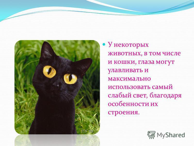 У некоторых животных, в том числе и кошки, глаза могут улавливать и максимально использовать самый слабый свет, благодаря особенности их строения.