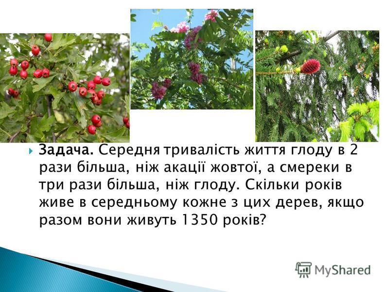 Задача. Середня тривалість життя глоду в 2 рази більша, ніж акації жовтої, а смереки в три рази більша, ніж глоду. Скільки років живе в середньому кожне з цих дерев, якщо разом вони живуть 1350 років?