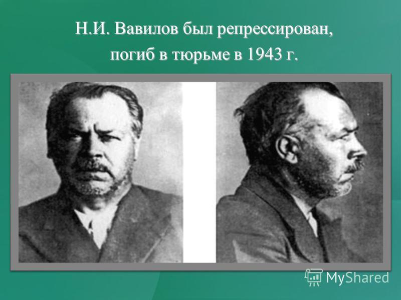 Н.И. Вавилов был репрессирован, погиб в тюрьме в 1943 г.