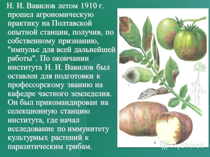 Н. И. Вавилов летом 1910 г. прошел агрономическую практику на Полтавской опытной станции, получив, по собственному признанию,