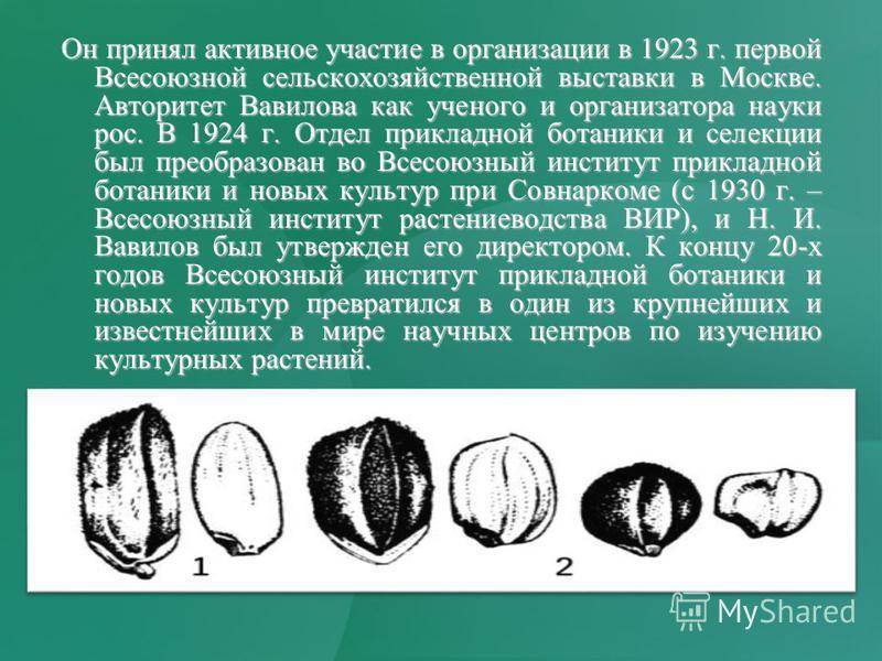 Он принял активное участие в организации в 1923 г. первой Всесоюзной сельскохозяйственной выставки в Москве. Авторитет Вавилова как ученого и организатора науки рос. В 1924 г. Отдел прикладной ботаники и селекции был преобразован во Всесоюзный инстит