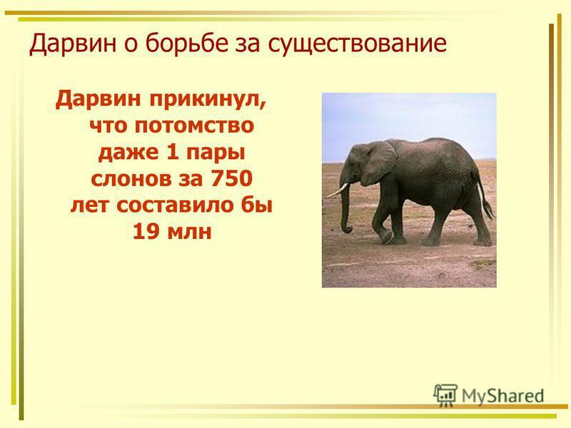 Дарвин о борьбе за существование Дарвин прикинул, что потомство даже 1 пары слонов за 750 лет составило бы 19 млн