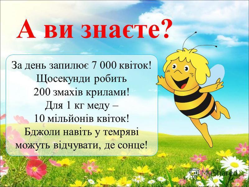 А ви знаєте? За день запилює 7 000 квіток! Щосекунди робить 200 змахів крилами! Для 1 кг меду – 10 мільйонів квіток! Бджоли навіть у темряві можуть відчувати, де сонце!
