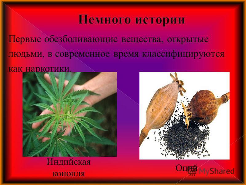 Первые обезболивающие вещества, открытые людьми, в современное время классифицируются как наркотики. Опий Индийская конопля