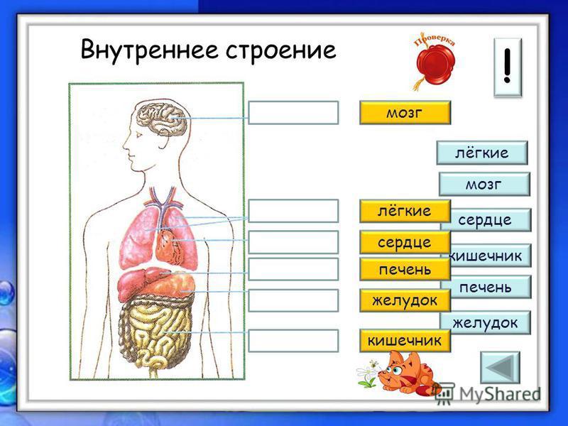 Дорогой друг! ! ! Задание на слайде, подсказка, информация Переход по слайдам поможет осуществлять Доктор и Начало тестирования