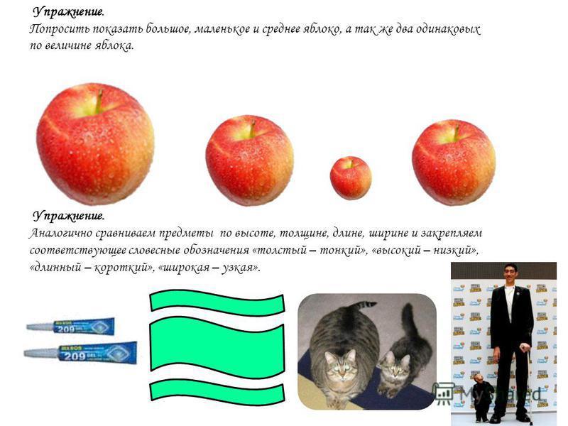 Упражнение. Попросить показать большое, маленькое и среднее яблеоко, а так же два одинаковых по величине яблеока. Упражнение. Аналеогично сравниваем предметы по высоте, толщине, длине, ширине и закрепляем соответствующее слеовесные обозначения «толст