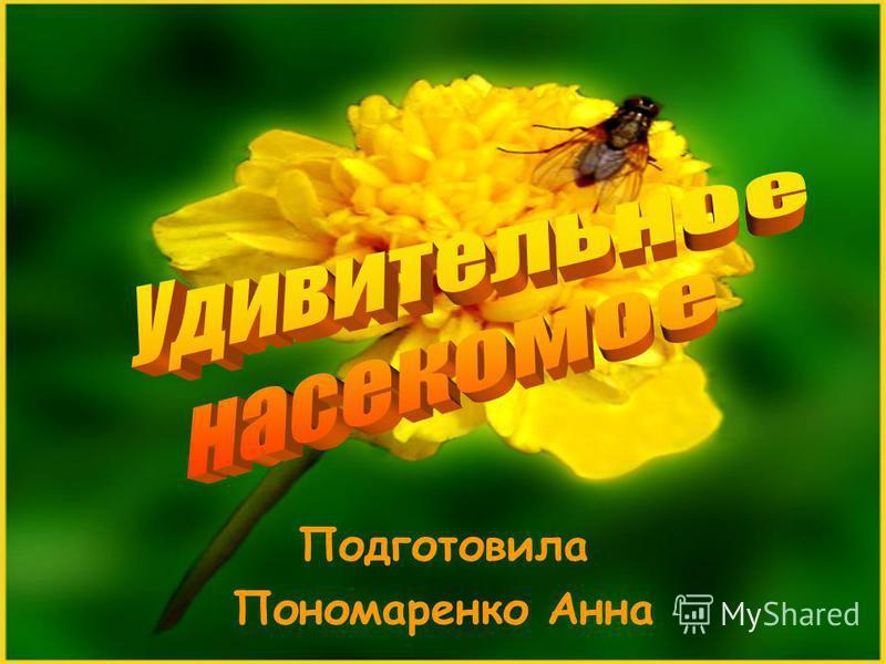 Подготовила Пономаренко Анна