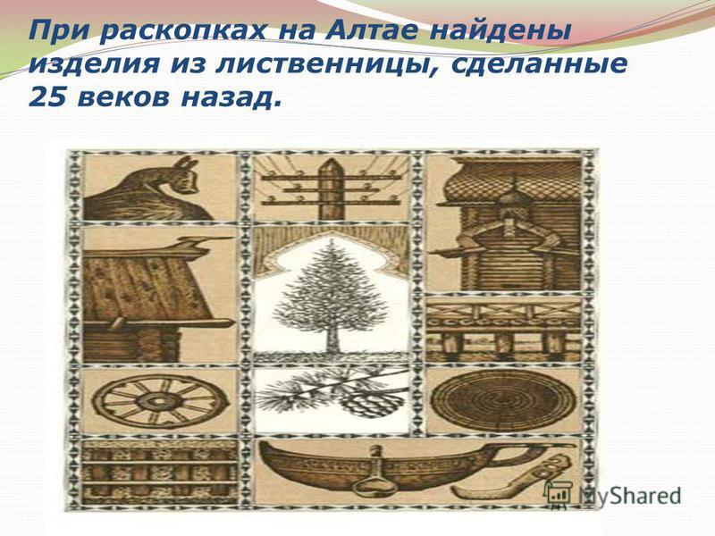 При раскопках на Алтае найдены изделия из лиственницы, сделанные 25 веков назад.