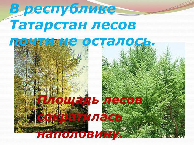В республике Татарстан лесов почти не осталось. Площадь лесов сократилась наполовину.