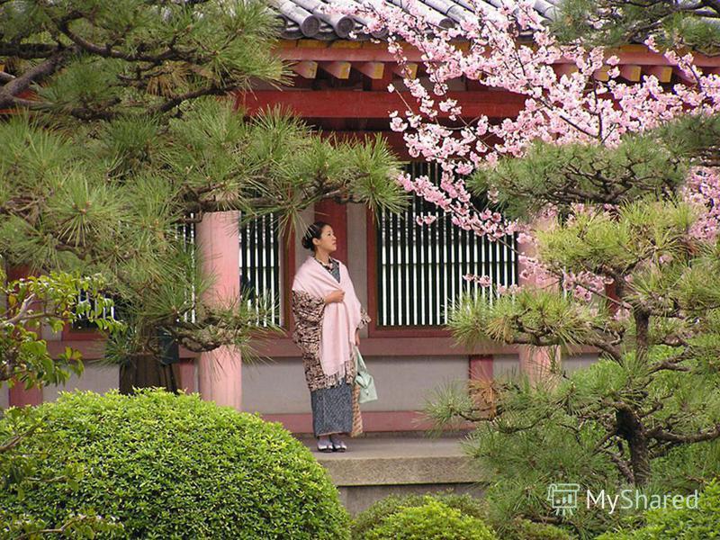 Сакура и замок-пагода