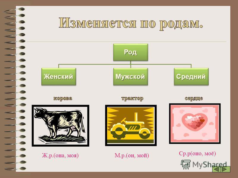 Род Женский Мужской Средний Ж.р.(она, моя) М.р.(он, мой) Ср.р(оно, моё)