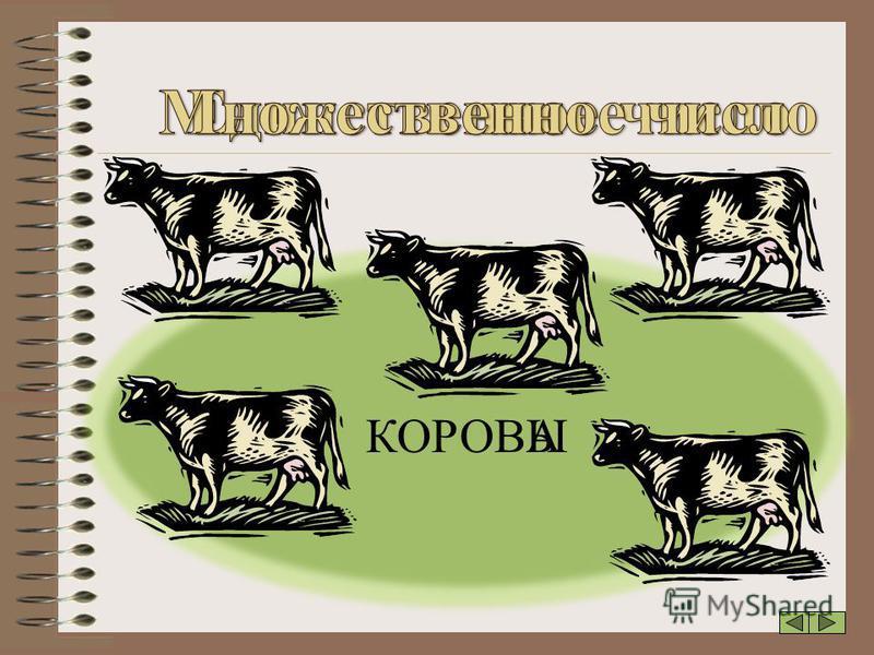 КОРОВАЫ
