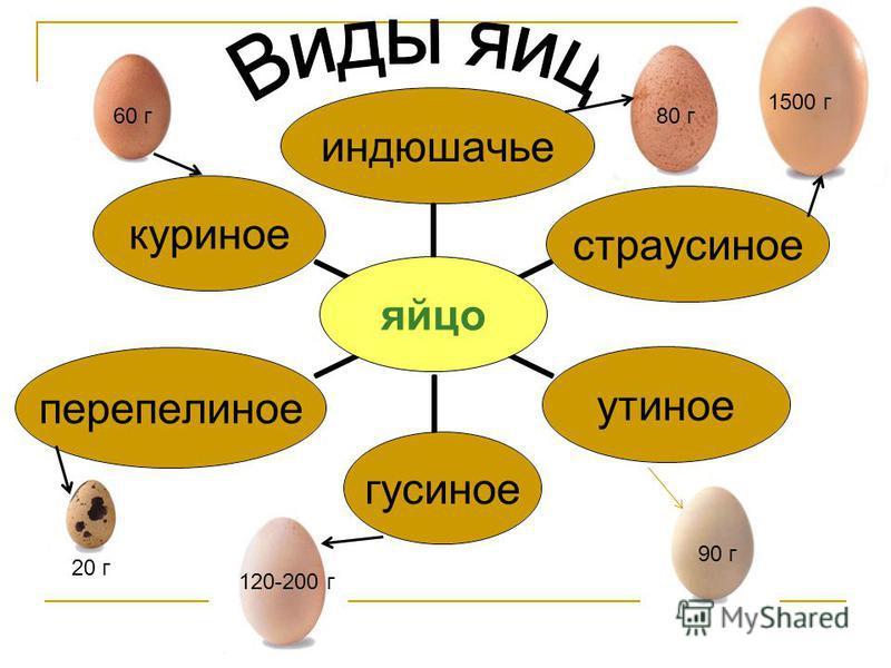 яйцо страусиноеиндюшачьеутиноегусиноеперепелиноекуриное 20 г 90 г 120-200 г 60 г 80 г 1500 г