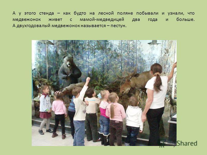 А у этого стенда – как будто на лесной поляне побывали и узнали, что медвежонок живет с мамой-медведицей два года и больше. А двухгодовалый медвежонок называется – пестун.