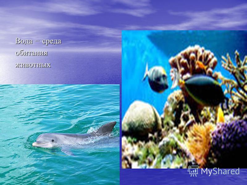 Вода – среда обитания животных