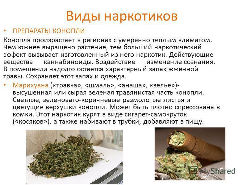 Виды наркотиков ПРЕПАРАТЫ КОНОПЛИ Конопля произрастает в регионах с умеренно теплым климатом. Чем южнее выращено растение, тем больший наркотический эффект вызывает изготовленный из него наркотик. Действующие вещества каннабиноиды. Воздействие измене