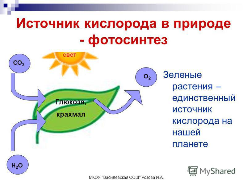 Источник кислорода в природе - фотосинтез Зеленые растения – единственный источник кислорода на нашей планете свет Глюкоза, крахмал СО 2 О2О2 Н2ОН2О МКОУ Василевская СОШ Розова И.А.
