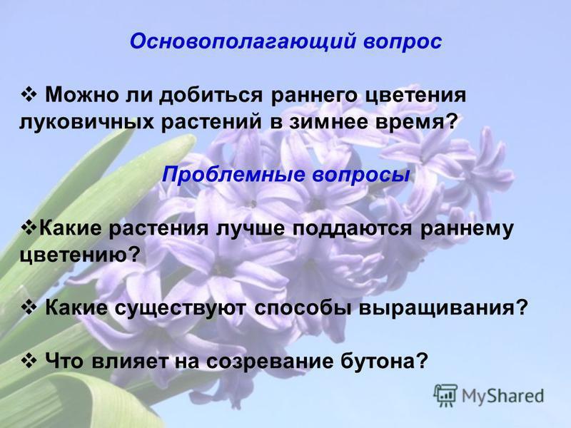 Основополагающий вопрос Можно ли добиться раннего цветения луковичных растений в зимнее время? Проблемные вопросы Какие растения лучше поддаются раннему цветению? Какие существуют способы выращивания? Что влияет на созревание бутона?