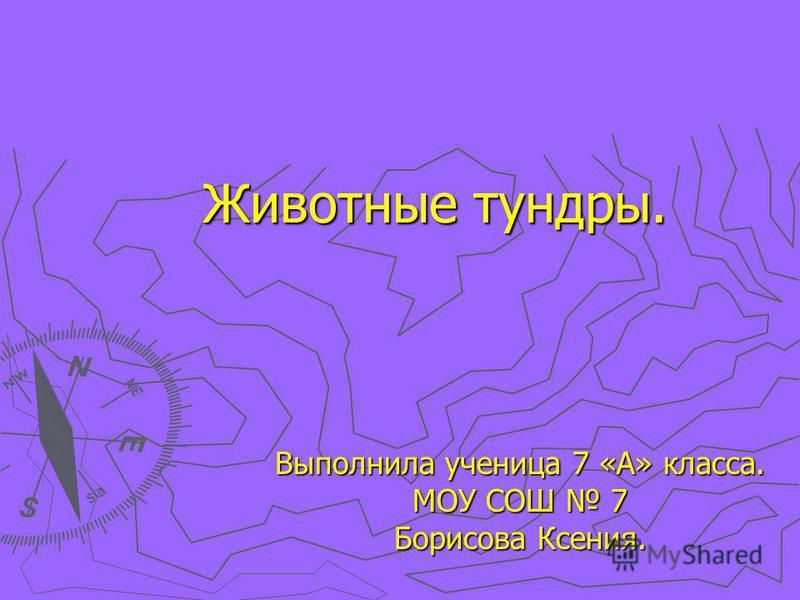Животные тундры. Выполнила ученица 7 «А» класса. МОУ СОШ 7 Борисова Ксения.