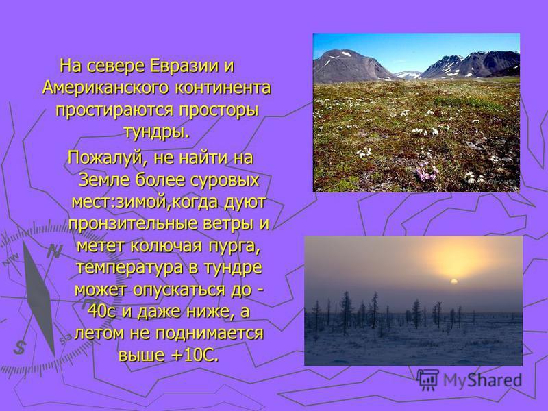 На севере Евразии и Американского континента простираются просторы тундры. Пожалуй, не найти на Земле более суровых мест:зимой,когда дуют пронзительные ветры и метет колючая пурга, температура в тундре может опускаться до - 40c и даже ниже, а летом н