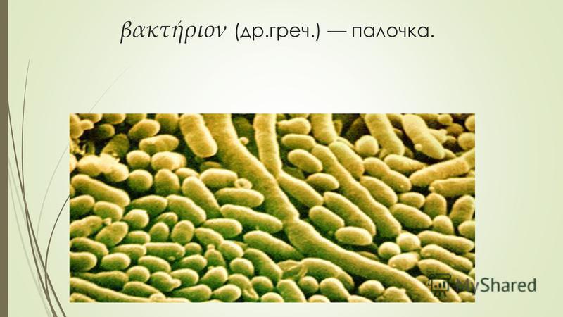βακτήριον (др.греч.) палочка.