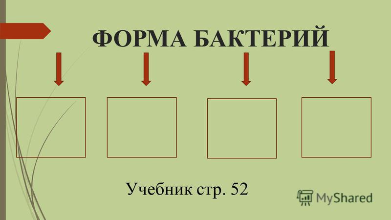 ФОРМА БАКТЕРИЙ Учебник стр. 52