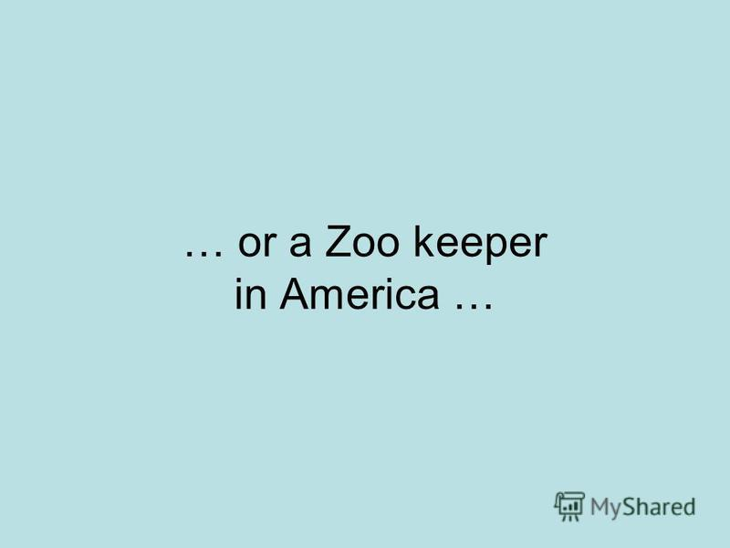 … or a Zoo keeper in America …