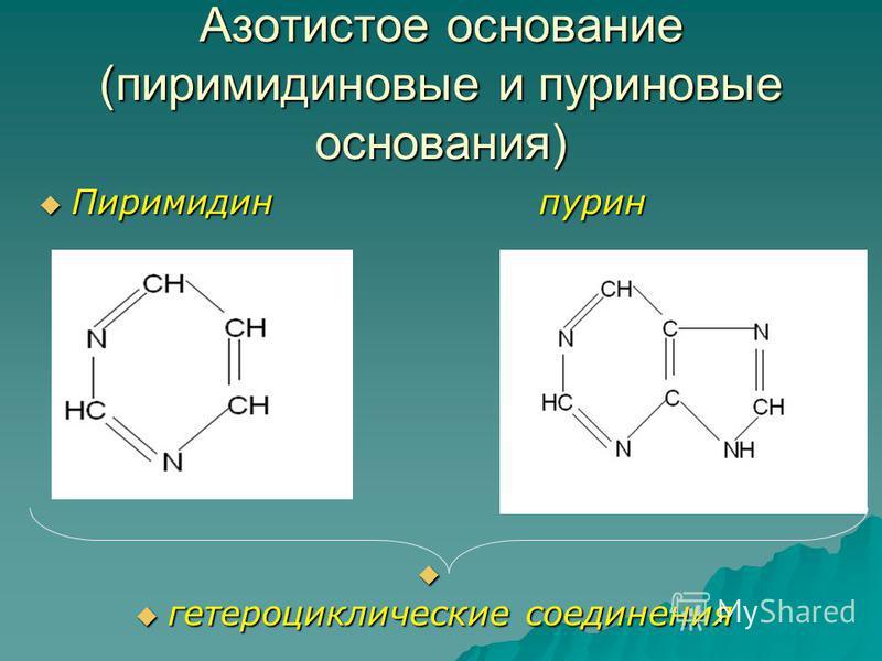 Азотистое основание (пиримидиновые и пуриновые основания) Пиримидин пурин Пиримидин пурин гетероциклические соединения гетероциклические соединения