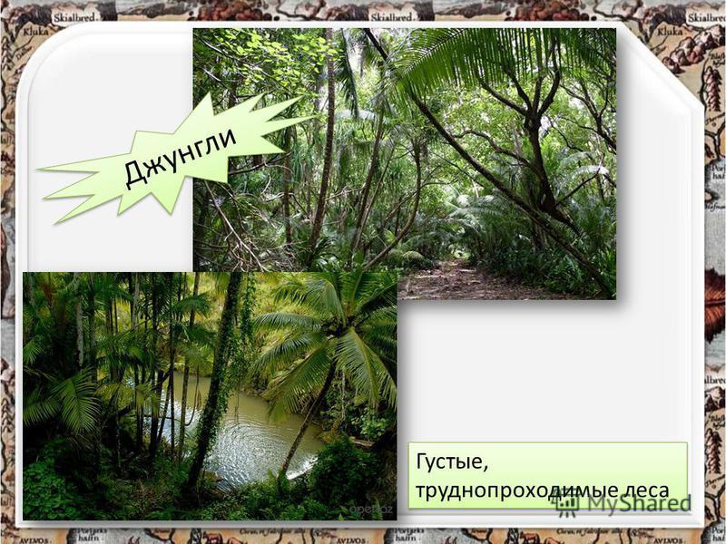 Джунгли Густые, труднопроходимые леса