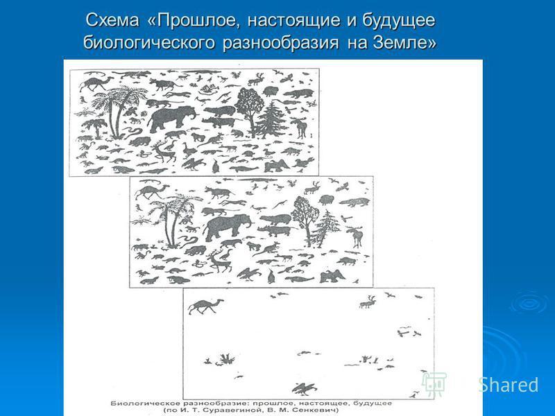 Схема «Прошлое, настоящие и будущее биологического разнообразия на Земле»