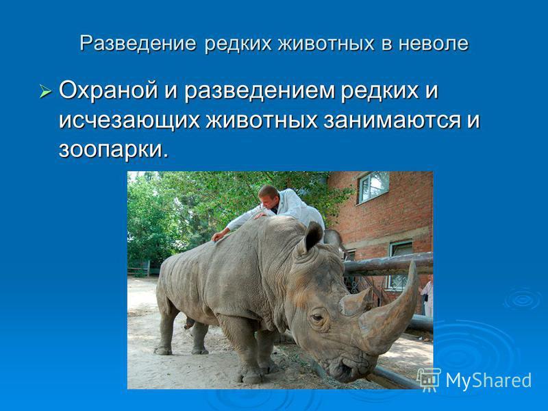 Разведение редких животных в неволе Охраной и разведением редких и исчезающих животных занимаются и зоопарки. Охраной и разведением редких и исчезающих животных занимаются и зоопарки.