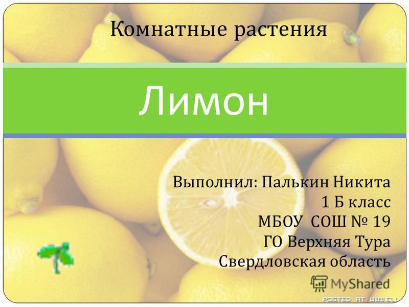 Выполнил : Палькин Никита 1 Б класс МБОУ СОШ 19 ГО Верхняя Тура Свердловская область Лимон Комнатные растения