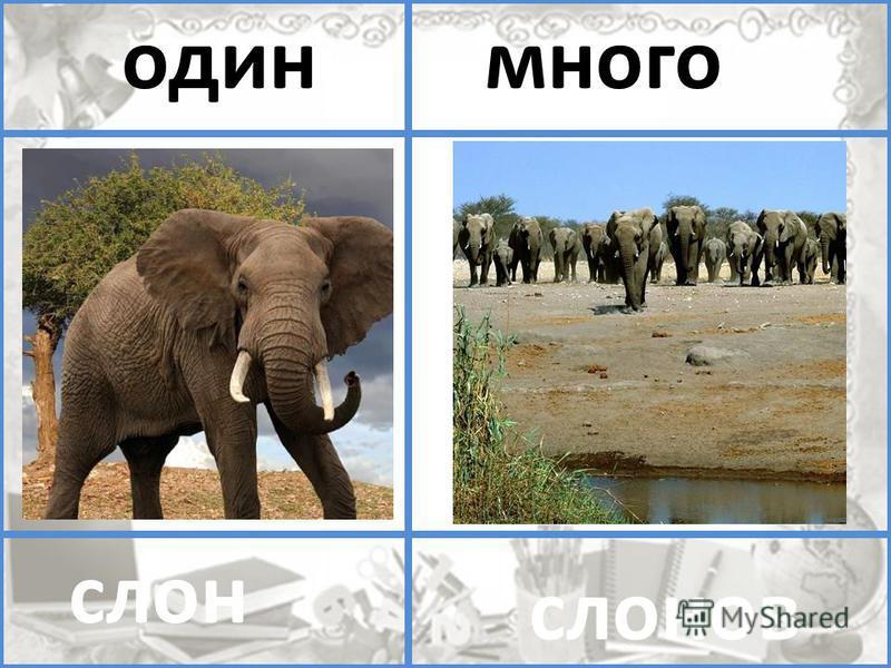 помидор помидоров один много слон слонов один много