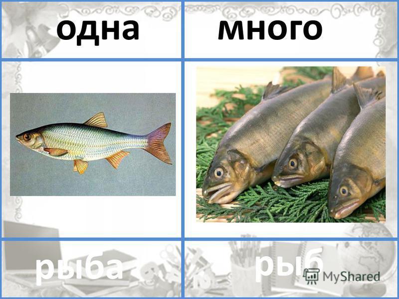 помидор помидоров один многоодна много рыба рыб