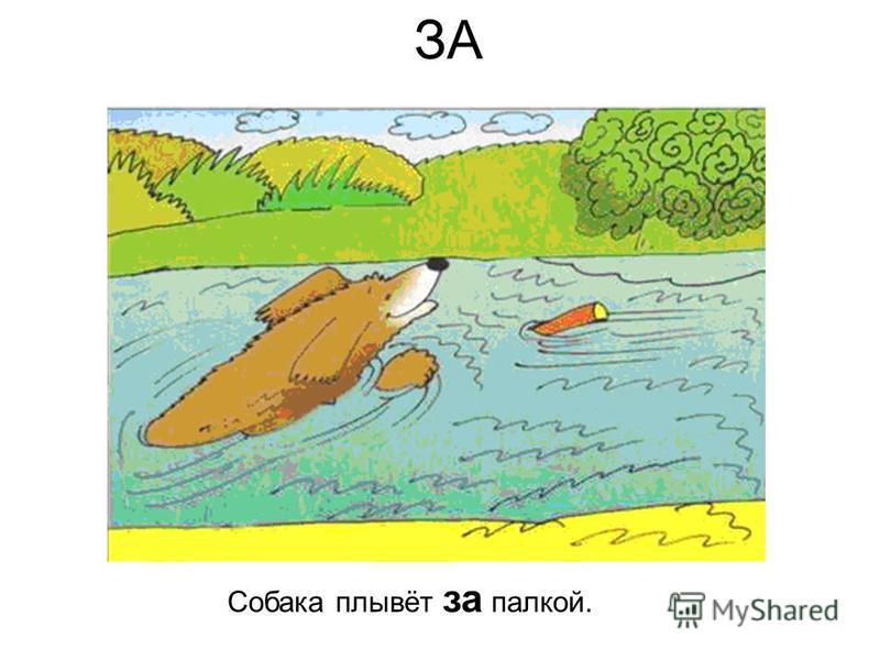 ЗА Собака плывёт за палкой.
