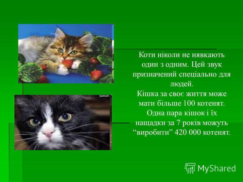 Коти ніколи не нявкають один з одним. Цей звук призначений спеціально для людей. Кішка за своє життя може мати більше 100 котенят. Одна пара кішок і їх нащадки за 7 років можуть виробити 420 000 котенят.