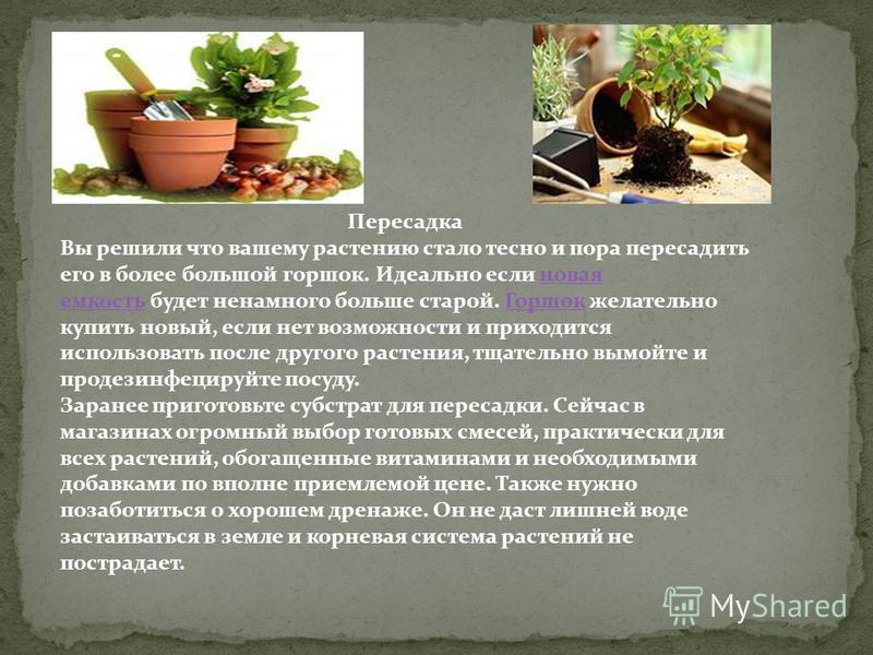 Пересадка Вы решили что вашему растению стало тесно и пора пересадить его в более большой горшок. Идеально если новая емкость будет ненамного больше старой. Горшок желательно купить новый, если нет возможности и приходится использовать после другого