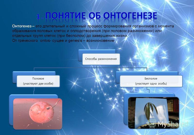 Онтогенез – это длительный и сложный процесс формирования организмов с момента образования половых клеток и оплодотворения (при половом размножении) или отдельных групп клеток (при бесполом) до завершения жизни. От греческого ontos- сущее и genesis –