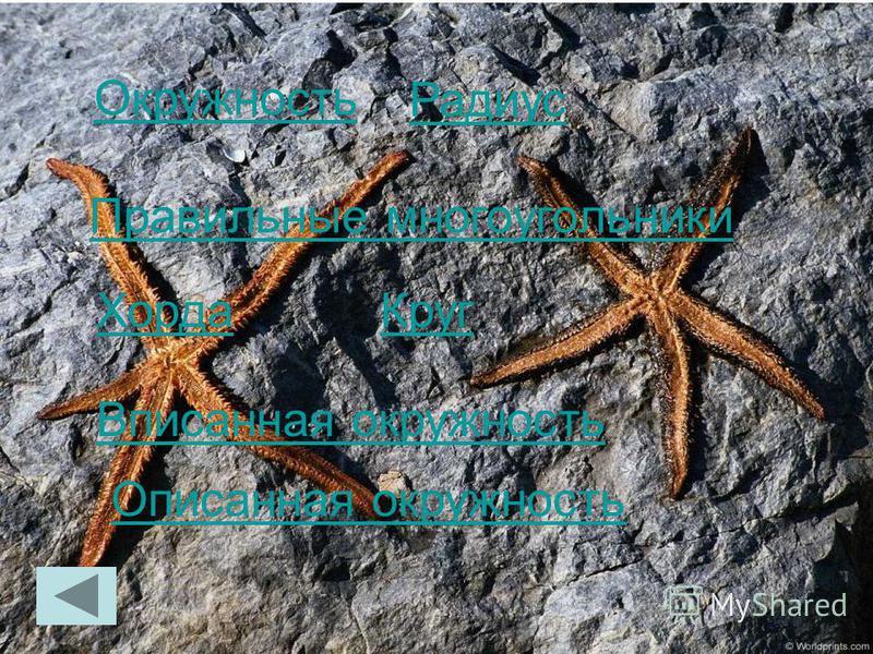 Радиус Хорда Круг Правильные многоугольники Окружность Вписанная окружность Описанная окружность