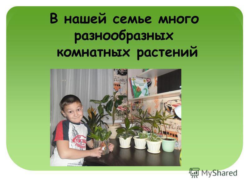 В нашей семье много разнообразных комнатных растений
