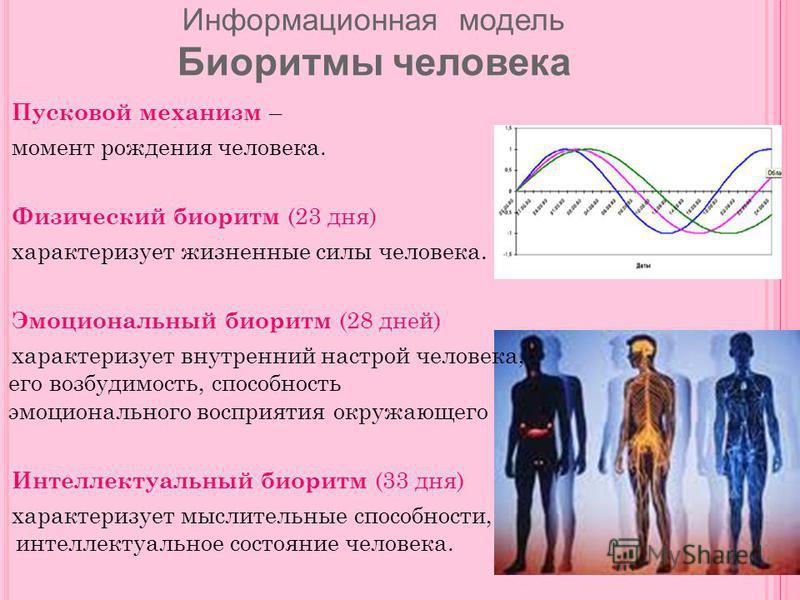Пусковой механизм – момент рождения человека. Физический биоритм (23 дня) характеризует жизненные силы человека. Эмоциональный биоритм (28 дней) характеризует внутренний настрой человека, его возбудимость, способность эмоционального восприятия окружа