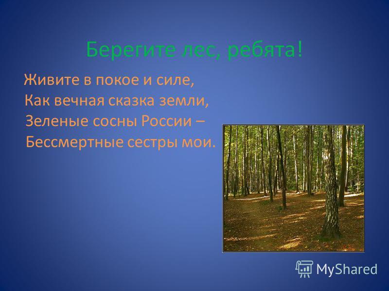 Берегите лес, ребята! Живите в покое и силе, Как вечная сказка земли, Зеленые сосны России – Бессмертные сестры мои.
