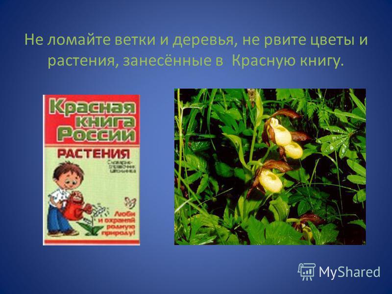 Не ломайте ветки и деревья, не рвите цветы и растения, занесённые в Красную книгу.
