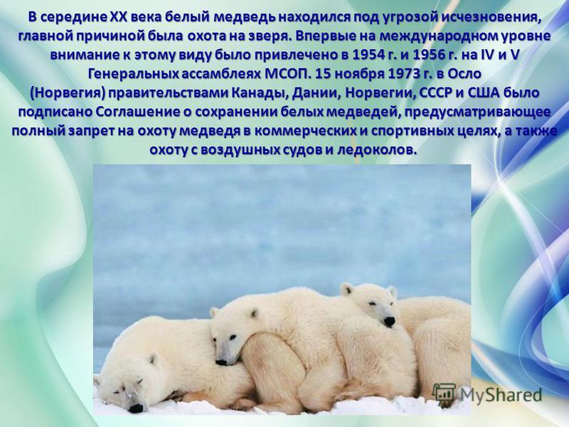 В середине XX века белый медведь находился под угрозой исчезновения, главной причиной была охота на зверя. Впервые на международном уровне внимание к этому виду было привлечено в 1954 г. и 1956 г. на IV и V Генеральных ассамблеях МСОП. 15 ноября 1973