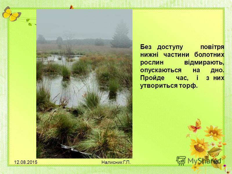 Без доступу повітря нижні частини болотних рослин відмирають, опускаються на дно. Пройде час, і з них утвориться торф. 12.08.201510Налисник Г.П.