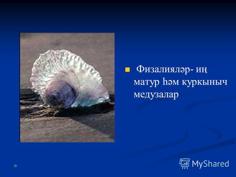Физалияләр- иң матур һәм куркыныч медузалар »