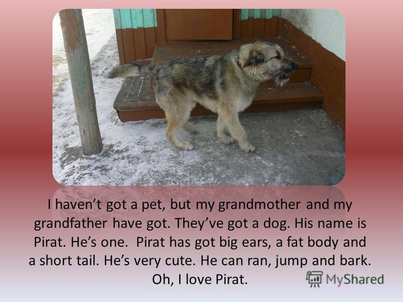 I havent got a pet, but my grandmother and my grandfather have got. Theyve got a dog. His name is Pirat. Hes one. Pirat has got big ears, a fat body and a short tail. Hes very cute. He can ran, jump and bark. Oh, I love Pirat.