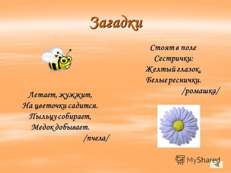Загадки Летает, жужжит, На цветочки садится. Пыльцу собирает, Медок добывает. /пчела/ Стоят в поле Сестрички: Желтый глазок, Белые реснички. /ромашка/
