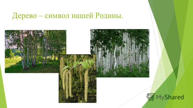 Дерево – символ нашей Родины.