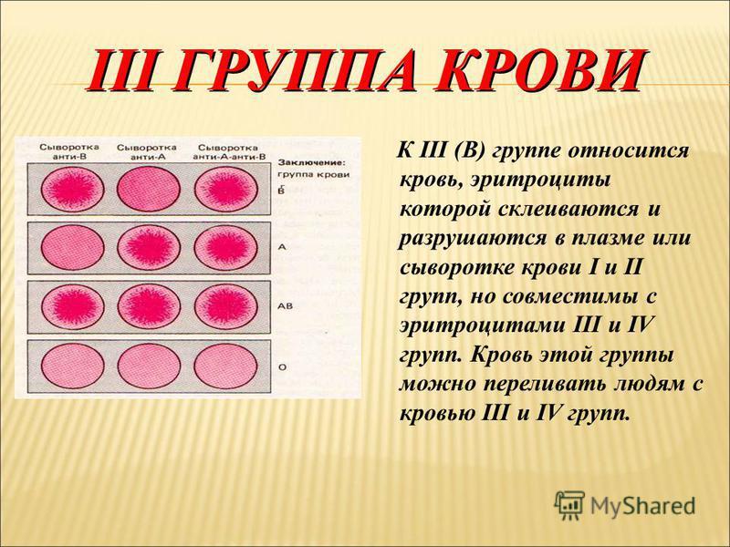 II ГРУППА КРОВИ Ко II (А) группе относится кровь, эритроциты которой склеиваются и разрушаются в плазме или сыворотке крови I и III групп. Кровь этой группы совместима с кровью II и IV групп, ее можно переливать только людям с этими группами крови.